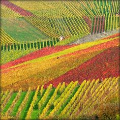 house nestled in the vineyards, Beutelsbach, Baden-Wurttemberg, Germany.