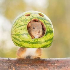 10 facts about squirrels you probably didn't know! – Squirrel appreciation day – Oh My God How Cute Baby Animals, Funny Animals, Cute Animals, Animal Facts, Animal Memes, Cute Squirrel, Squirrels, Beautiful Creatures, Animals Beautiful