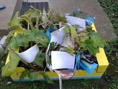 Így lesz virágoktól roskadó begóniád | Balkonada Planter Pots