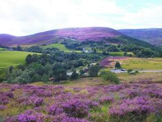 Fields of Heather on the Brig O'Broon