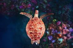 Tier Wallpaper, Animal Wallpaper, Photo Wallpaper, Green Turtle, Turtle Top, Underwater World, Animals Beautiful, Animals And Pets, Creative