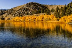 HOLIDAY SALE 25% OFF all photos in my gallery Coupon Code: TJYBUV  Title: Autumn Golden Foliage on Mountain Lake  I took this photograph while on a fishing/photography trip to June Lake in the Sierra Nevada Mountains of California.   Website: jerry-cowart.artistwebsites.com  http://fineartamerica.com/featured/autumn-golden-foliage-on-mountain-lake-reflection-fine-art-photography-print-jerry-cowart.html?newartwork=true