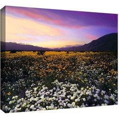 ArtWall Dean Uhlinger Borrego Desert Spring Gallery-Wrapped Canvas, Size: 24 x 32, Brown