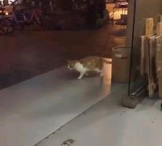 Cat Jokes, Funny Animal Jokes, Funny Cute Cats, Funny Cats And Dogs, Cute Funny Animals, Cat And Dog Videos, Funny Cat Videos, Funny Cat Photos, Funny Animal Pictures