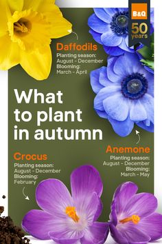 Braving the Autumn chill will be well worth it in the Spring, when you can smugly show off your colourful garden to the world! Our quick guide tells you what flowers to plant and when. Colourful Garden, Spring Flowering Bulbs, Sensory Garden, Small Gardens, Daffodils, Fall Recipes, Garden Plants, Planting Flowers, Garden Ideas