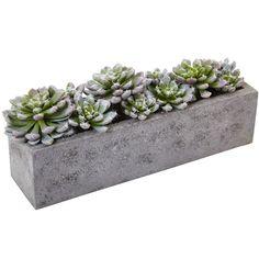 Succulent Garden With Textured Concrete Planter