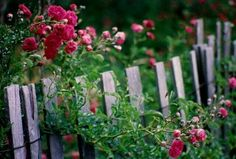Pretty fence and flowers