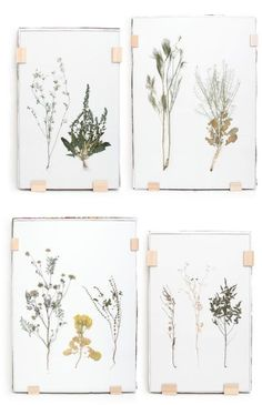 pretty pressed flowers wall art DIY Inspiration