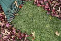 Read about these fall lawn tips on our blog!