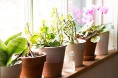 Guia Para Suas Plantas Não [ou Nunca Mais] Morrerem
