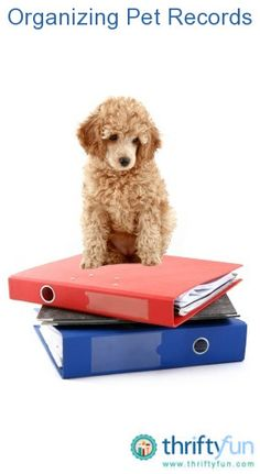 This is a guide about organizing pet records. Keeping your pets' records well organized is important to track their vaccinations and other important information.