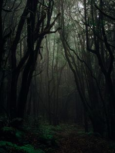 Browse through our collection of forest images and forest pictures. High quality pictures of forest and images of forest. All forest photos are royalty free. Dark Green Aesthetic, Nature Aesthetic, Aesthetic Light, Fantasy Forest, Dark Fantasy, Johanna Basford Enchanted Forest, Lightroom, Theme Nature, Night Forest