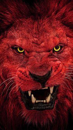 Red lion wallpaper by mirapav - 71 - Free on ZEDGE™ Lion Live Wallpaper, Wild Animal Wallpaper, Wolf Wallpaper, Tiger Pictures, Wild Animals Pictures, Lion King Art, Lion Art, Fire Lion, Tiger Artwork