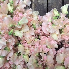 The prettiest English sweet peas for Saturday's wedding. They smell so good!