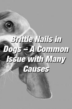 Vanessa Churchill Tells About Brittle Nails in Dogs – A Common Issue with Many Causes #dogs#catsanddogs#dogdog#babydogs#dogcat#cutedogs#petideas#animaldiyspets#petstuff #BiotinForHairLoss #ArganOilForHairLoss