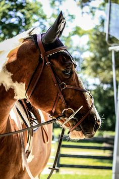 """""""The horse is your mirror, it never flatters you. It mirrors your temper. It also reflects your ups and downs. Never get angry at your horse, you might as well be angry with your mirror."""""""