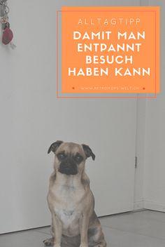 Wen der Hund sich zu fest auf den Besuch freut, kann das unangenehm werden. Das mussten Wir Mia beibringen. Entspannen| Erziehung| Hund| Alltag mit Hund|