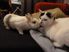 Bunny tries to cheer up kitty with nose kisses - December 18, 2012