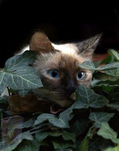 Cool Cats, I Love Cats, Tier Wallpaper, Animal Wallpaper, Animals And Pets, Funny Animals, Cute Animals, Crazy Cat Lady, Crazy Cats