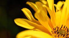 Flowers: Flower Rainy Day Rain Sadness Garden Desktop Wallpapers ...