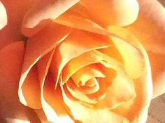 - centrale compositie - kunstmatig licht - oranje