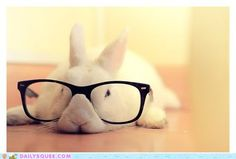 Nerd Bunny is tired from listening to dumb people all day...  LOL...¸.•*☼*•.¸♥¸.•*☼*•.¸