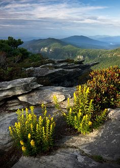 Goldenrod and Gorge View by Sugar Mtn Photography, via Flickr