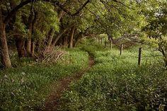 Path by ethel