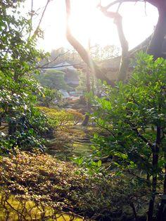 Kyoto garden