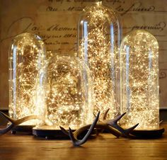 French Glass Cloche and Starry string lights from Restoration Hardware - Center piece inspiration