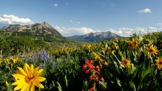 5 Glorious Colorado Hiking Trails http://www.colorado.com/articles/5-glorious-colorado-hiking-trails?utm_source=Email&utm_medium=Email&utm_campaign=July2014_OOS