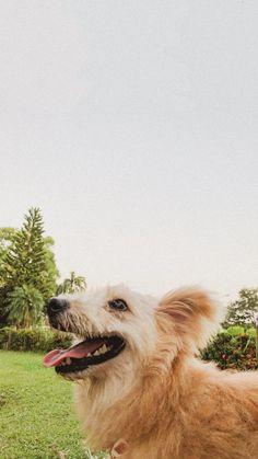 #Dog #doggo #Pupper #Doge #Poddle #sheepadoddle #ezkywalker Doge, Animals, Animales, Animaux, Animal, Animais