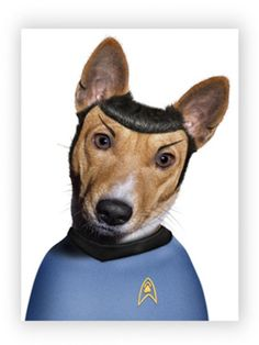 Star Trek puppy! Haha!....I got my brother a calender with these animals on it. He got a kick out of it for sure,lol.