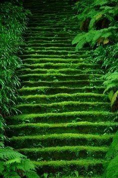 Moss in temple stairs 鎌倉妙法寺 Myoho-ji Temple, Kamakura, Japan Kamakura, Beautiful World, Beautiful Places, Beautiful Scenery, Beautiful Beautiful, Wonderful Places, Nature Verte, Japan Photo, Stairway To Heaven