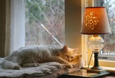 """grungeouttakesabstracts: """" How to spend a gray morning Little Compton, Rhode Island - """" Crazy Cat Lady, Crazy Cats, Little Compton, Soft Kitty Warm Kitty, Cat Light, Winter Cat, Autumn Cozy, Through The Window, Cozy Mysteries"""