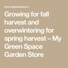 Growing for fall harvest and overwintering for spring harvest – My Green Space Garden Store