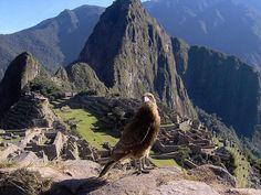 Aves típicas de Perú.