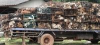 Sign the Petition: Stop The Dog Meat Smuggling Trade