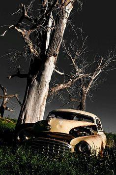 I  like old trees