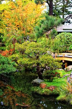 Much to my delight, we were able to fit in a visit to The Japanese Tea Garden in the heart of San Francisco's Golden Gate Park. The Japanese Tea garden is considered the oldest public Japanese garden in the United States.