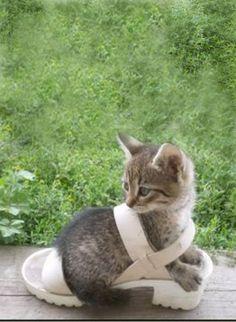 ♔ Kitty in a shoe