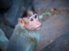 Un pequeño mono