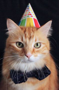 We have you covered for your next kitty bash, whether it's celebrating a birthday, an adoption date, or that dead mouse they brought in last week. No occasion is too small to celebrate with a cat party! Here are a few tips. Happy Birthday Ginger, Happy Birthday Images, Happy Birthday Greetings, Cat Birthday, Birthday Wishes, Cool Cats, Cat Celebrating, Holiday Day, Cat Hat