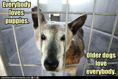 Adopt an older dog, anyone will adopt a puppy. It takes a person with a big heart to adopt an older dog.