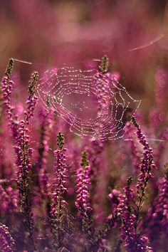 spiderweb with dew drops on flowers
