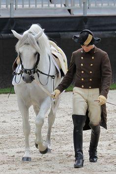 Spanish riding school of Vienna Morgan Horse, Most Beautiful Animals, Beautiful Horses, Pretty Horses, Horse Love, Lippizaner, Lipizzan, Spanish Riding School, Equestrian Chic