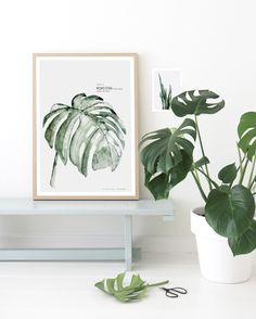 Plate 3 / Monstera Urban Botanic Watercolor painting printed on 250 g. fine art photo paper. Limited edition of 500. Signed by artist with handwritten numbering. SHIPPINGThe art print is sold unframed and carefully packed and shipped in a cardboard tube to avoid damage during shipping.Fits perfectly into Ikea's RIBBA frame.
