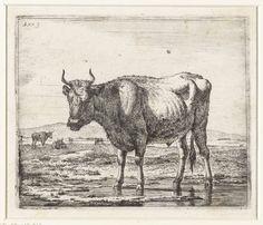 Stier staand in ondiep water, Adriaen van de Velde, 1657 - 1659