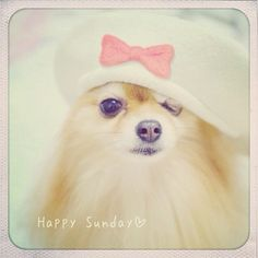 Have a lovely Sunday everyone - @taluggy   Webstagram