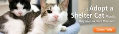 June is ADOPT A SHELTER CAT month.  Adopt, volunteer, advocate to make a difference in the lives of shelter cats. ASPCA | The American Society for the Prevention of Cruelty to Animals